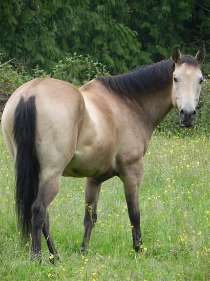 Horse Naked Boy Horses Wonders Know Praised