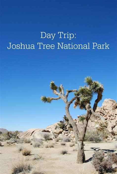 The 25 Best Joshua Tree National Park Ideas On Pinterest