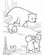 Coloring Bear American Popular sketch template