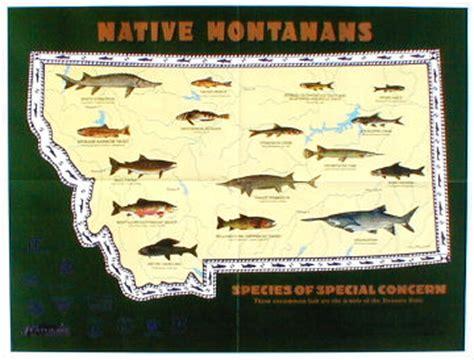 native montanans