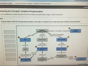 You Complete This Concept Map That Reviews The Oxi ...