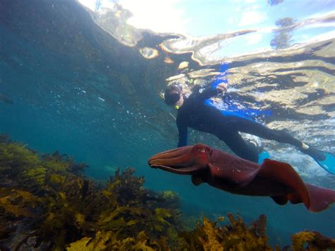 sydney snorkeling tours ecotreasures