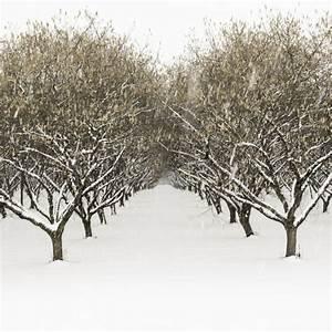 Quoi Planter En Automne : fruitiers arbustes quoi planter en d cembre ooreka ~ Melissatoandfro.com Idées de Décoration