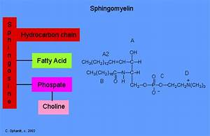 Sphingolipids