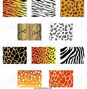 animal prints pictures