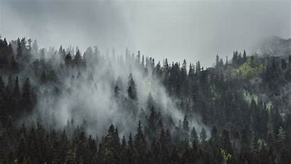 Forest Fog Trees Foggy Wallpapers Mountains 4k
