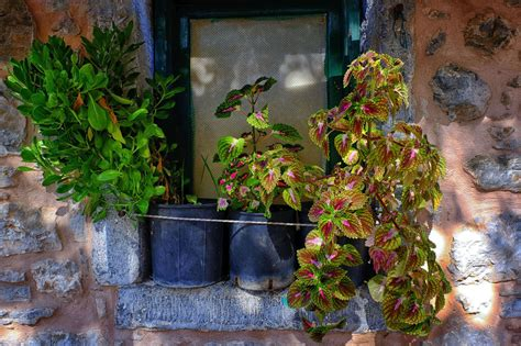 great container plants  shady spots