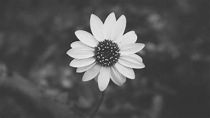 Aesthetic Backgrounds Flower Plant Desktop Wallpapertag