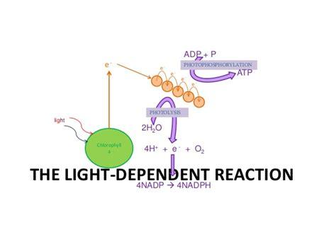 dependent definition aqa a2 biology unit 4 complete Light