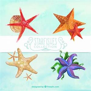 Starfish Vectors, Photos and PSD files | Free Download