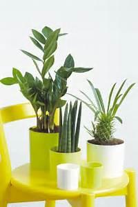 Feng Shui Büro : feng shui pflanzen f r harmonie und positive energie im ~ A.2002-acura-tl-radio.info Haus und Dekorationen
