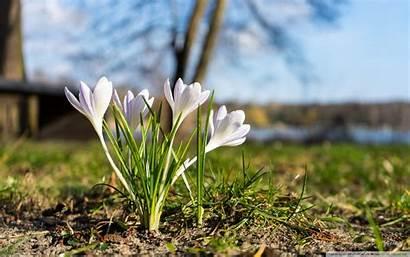 Spring Fruhling Pflanzen Flower Ultrahd Bellow Desired