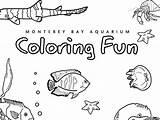Coloring Ocean Montereybayaquarium sketch template