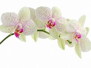 Orchids Residents Welfare Association  Different Types Of