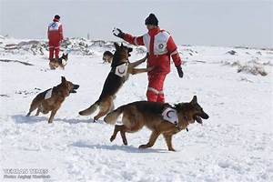 Tehran Times - Red Crescent sniffing dog training camp