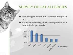 cat allergies symptoms cat allergies symptoms diagnosis treatment prevention