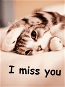 Cute CAT I MISS YOU - Mobile Wallpaper