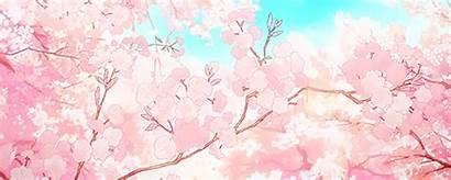 Sakura Aesthetic Anime Tree Gifs Blossom Cherry