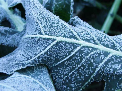 Frost Wallpaper  1600x1200 #70492