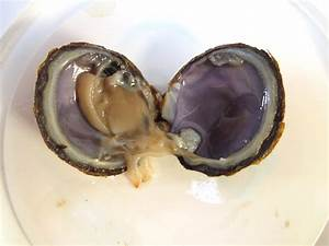 Clam Dissection  Or Mussel