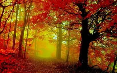 Autumn Woods Desktop Fall Backgrounds Wallpapers Nature