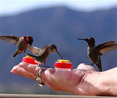 best hand held hummingbird feeders hummingbirds plus