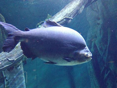Bid Fish Big Fish Caign The