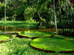 The Amazon Rainforest is the largest tropical Rainforest in the world ...