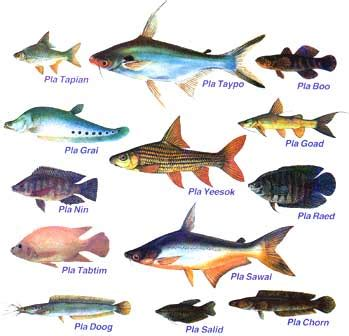 fishes   types  fishes