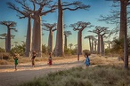 17 amazing facts about Madagascar, the island it took ...