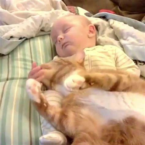 Glueckliche Haustiere Sauberkeit Und Erziehung by S 252 Ss Katze Chat Marrant Chat Und B 233 B 233