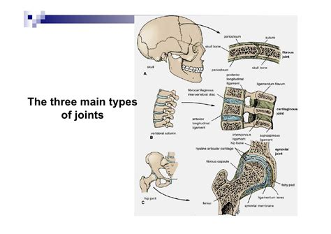 Fibrous Joint Location, Fibrous, Get Free Image About. Photographer Resume Skills. Best Civil Engineer Resume. Report Resume. Good Resume Formats. Occupational Therapist Resume. Environmental Science Resume Objective. Medical Office Assistant Resume. Resume Writing