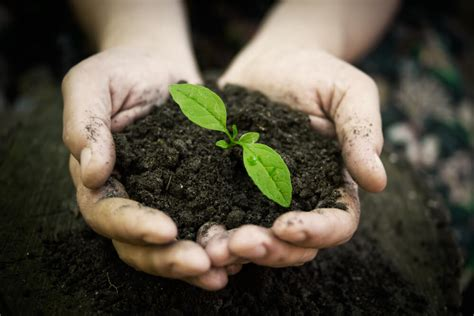 soil based organisms beneficial