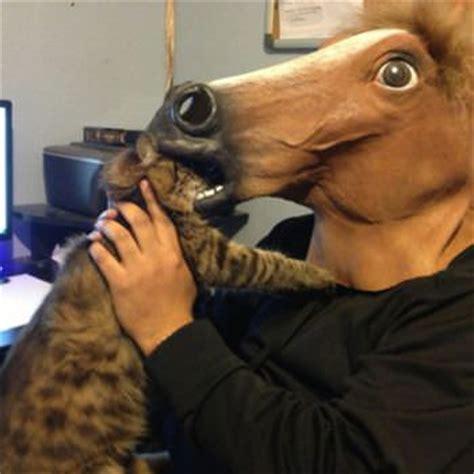 Horse Mask Meme - horse mask memes image memes at relatably com