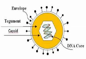 Virus Structure Components