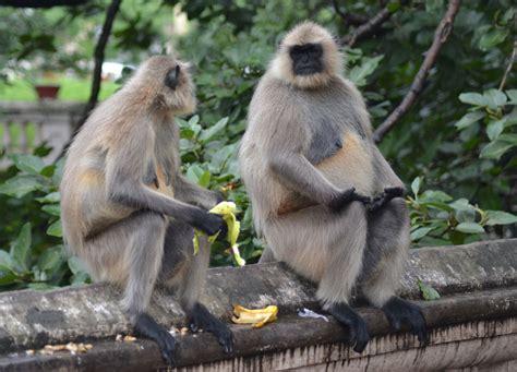 Fat Ugly Monkeys
