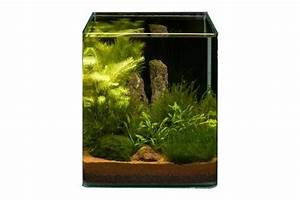 Moos Für Aquarium : pflanzensortiment moos cube f r 20 l nano aquarium aquariumpflanzen aquarienpflanzen alphabetisch ~ Frokenaadalensverden.com Haus und Dekorationen