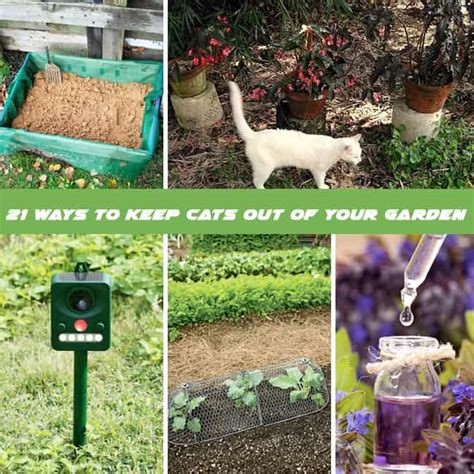 keep cats out of garden how to repel cats 21 ways to keep cats out of garden