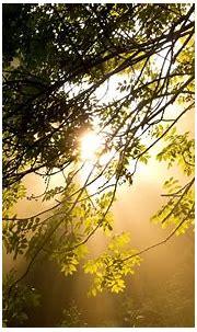 nice Good Morning Sunshine Wallpaper