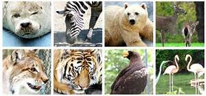 Reino Animalia | www.pixshark.com - Images Galleries With ...
