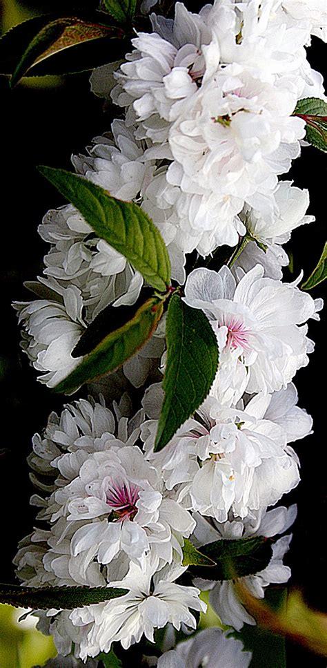 top  unusual fragrant plants  herbs  grow