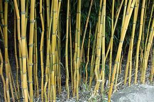 Bambus Im Garten : pflanz pflegeanleitung f r bambuspflanzen native plants ~ Markanthonyermac.com Haus und Dekorationen