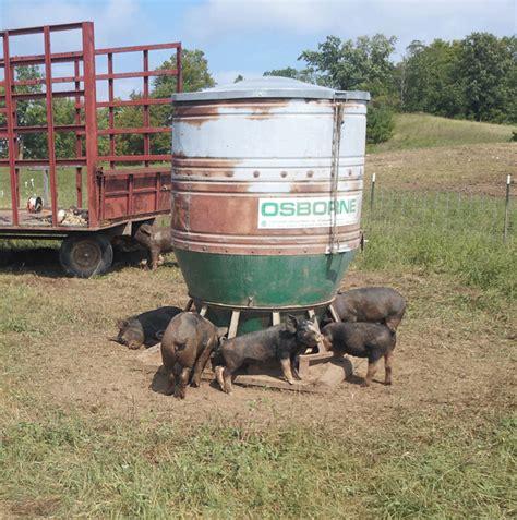 hog feeders for big wheel outdoor hog feeders osborne livestock equipment