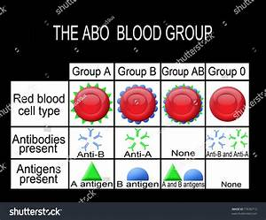 The Abo Blood Group Diagram  Useful For Medical Education