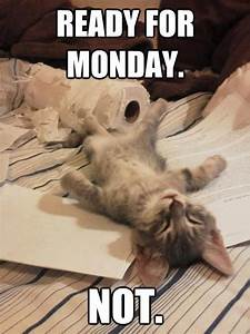 Ready for Monday funny quotes cute kitten monday days of ...