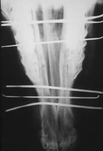 Mandible  Maxilla  Fracture In Horses