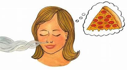 Smell Things Sense Helps Brain Clip Suarez