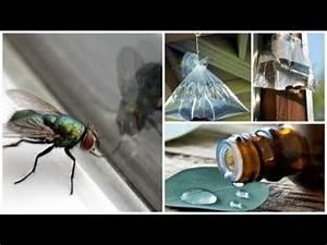 Comment Chasser Les Mouches : comment chasser les mouches naturellement de chez vous ~ Melissatoandfro.com Idées de Décoration