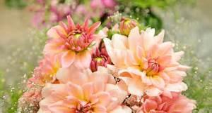 Blumen Der Liebe : hess blumen pflanzen leben ~ Orissabook.com Haus und Dekorationen