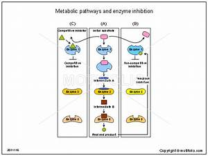 Metabolic Pathways And Enzyme Inhibition Illustrations